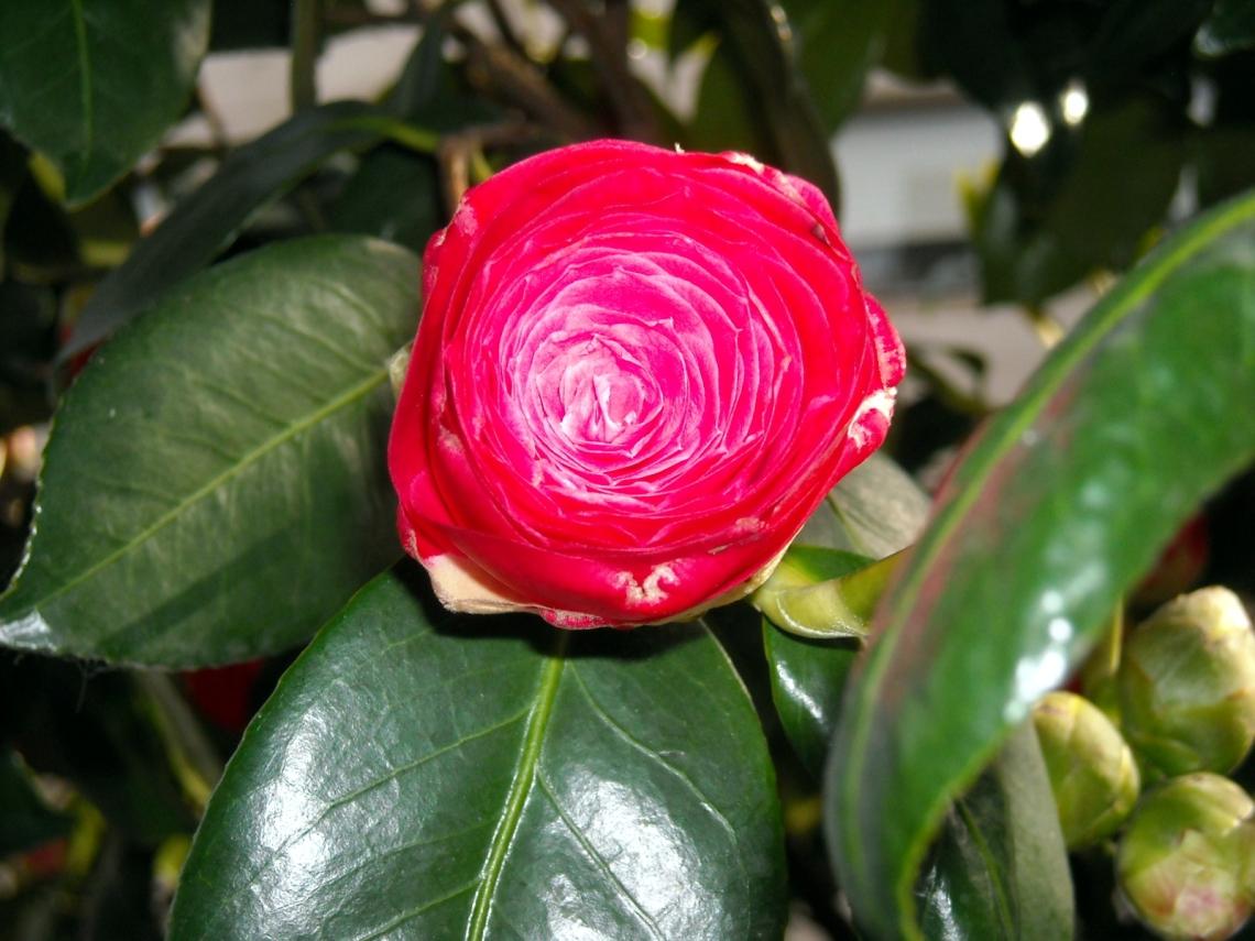 En un arbolillo de la acera, una modesta flor sonríe a la primavera