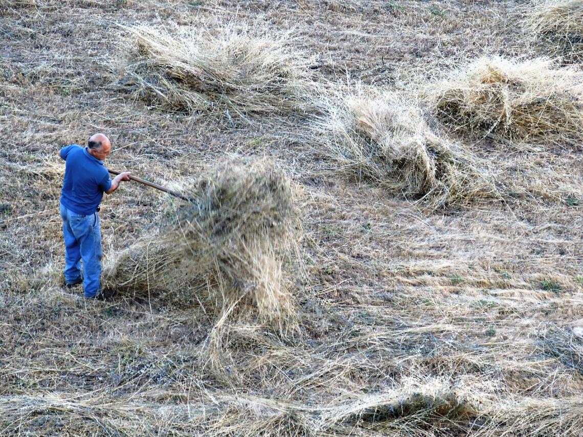El trabajo en el campo siempre me ha parecido demasiado duro como para realizarlo en solitario