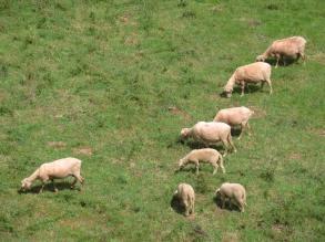 La fauna local, vista con mucha calma - y más instantáneas - desde el trípode montado en la ventana, Galicia, verano 2012