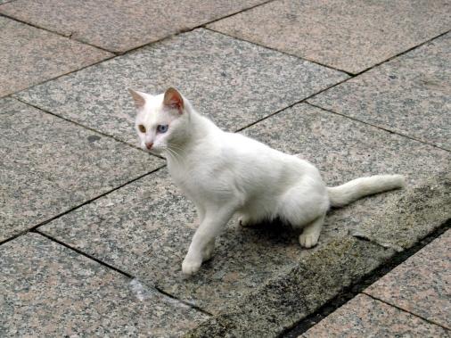 Se me atravesó un gato blanco, me saludó y siguió camino para luchar con un pedazo de plástico transparente. Galicia, septiembre 2012