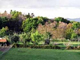 Prado en Galicia, primavera 2012 - todas las gamas posibles del verde están aquí, al noroeste de España