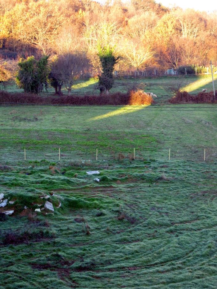 Empezando 2012, un prado salpicado de escarcha; engalanado con los ricos tonos de la campiña gallega - Enero