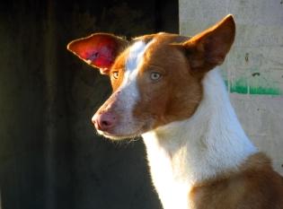 Un Can en A Gudiña (Galicia, España)
